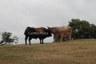 Centro Hara 31